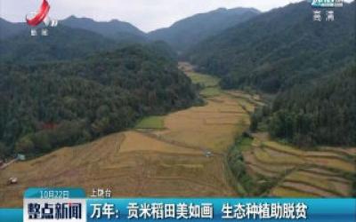 【中国的脱贫智慧】江西万年:贡米稻田美如画 生态种植助脱贫