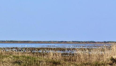 鄱阳湖开启又一年观鸟季