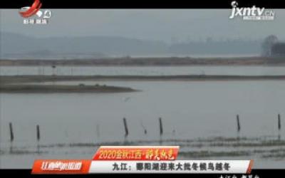 【2020金秋江西·醉美秋色】九江:鄱阳湖迎来大批冬候鸟越冬