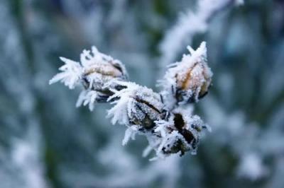 冷空气已签收,冷!冷!冷!小雪过后,这些事你得注意了