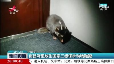 南昌湾里放生国家三级保护动物鼬獾