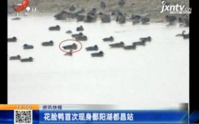 花脸鸭首次现身鄱阳湖都昌站