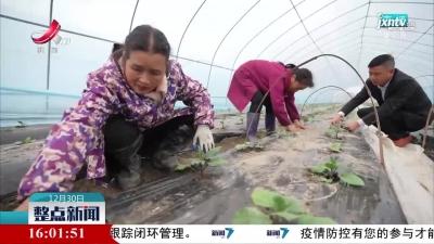 """【超强冷空气来袭】遂川:为蔬菜搭""""保温房"""""""