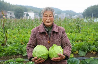 萍乡老关镇: 无公害蔬菜助脱贫(图)