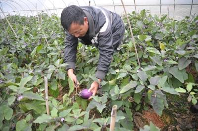 绿色蔬菜铺就创业致富之路