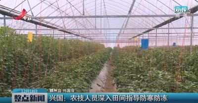 兴国:农技人员深入田间指导防寒防冻