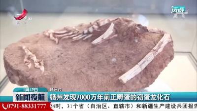赣州发现7000万年前正孵蛋的窃蛋龙化石