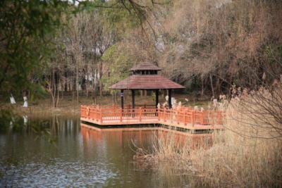 """宝山顾村公园的隐藏玩法!一起""""云赏""""这些传奇的桥"""