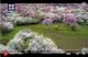 系列时政微视频丨美好空间——跟着总书记一起建设美丽中国