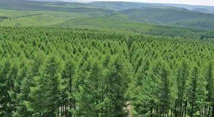 【地评线】江右时评:林长上岗,绿色共建又共享