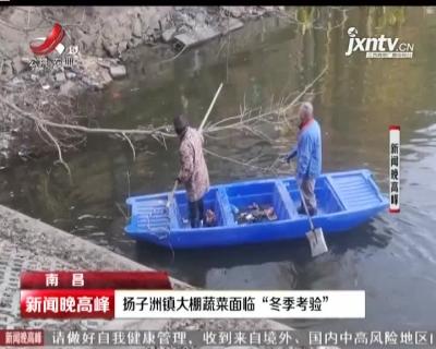 """南昌:扬子洲镇大棚蔬菜面临""""冬季考验"""""""