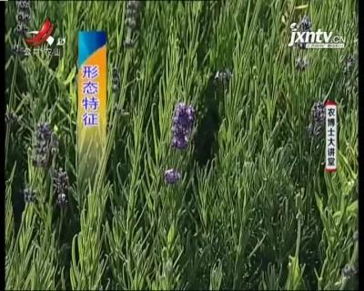 农博士大讲堂20210113 薰衣草的栽培技术