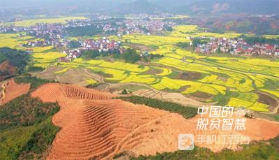 【中国的脱贫智慧】周兴:像种子一样扎根乡村