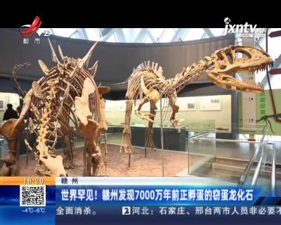 赣州:世界罕见!赣州发现7000万年前正孵蛋的窃蛋龙化石
