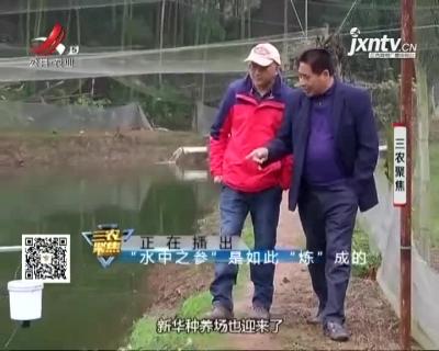 """三农聚焦20210113 """"水中之参""""是如何""""炼""""成的"""