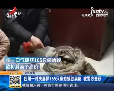 四川一对夫妻抓165只癞蛤蟆欲卖皮 被警方查获