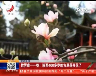 世界唯一一株!陕西400多岁的古旱莲开花了