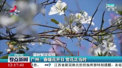 广州:春暖花开日 赏花正当时