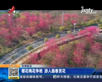 安徽歙县:樱花梅花争艳 游人踏春赏花
