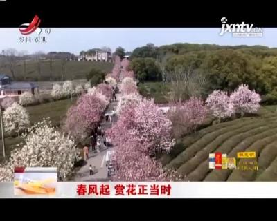 南昌:春风起 赏花正当时