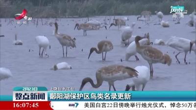 九江:鄱阳湖保护区鸟类名录更新