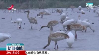 鄱阳湖保护区鸟类名录更新