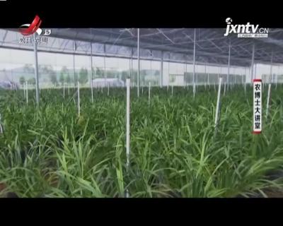农博士大讲堂20210225 建兰栽培技术