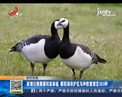 新增白颊黑雁和家麻雀 鄱阳湖保护区鸟种数量增至383种