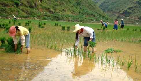 景德镇市春播期间气温偏高降水偏少 对早稻播种育秧有不利影响