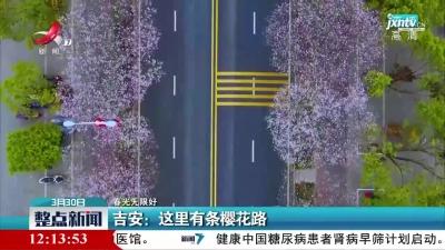 【春光无限好】吉安:这里有条樱花路