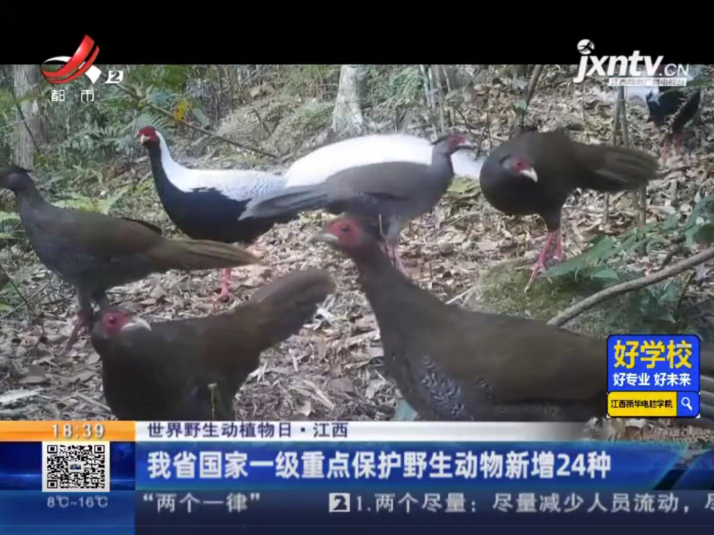 江西省国家一级重点保护野生动物新增24种