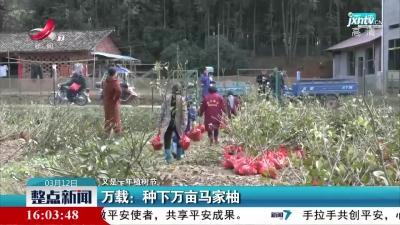 【又是一年植树节】万载:种下万亩马家柚
