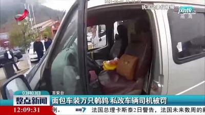 昌宁高速:面包车装万只鹌鹑 私改车辆司机被罚