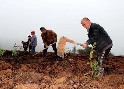 萍乡桐木镇:种下油茶树 百姓富有路