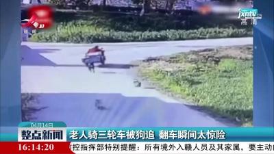 江苏:老人骑三轮车被狗追 翻车瞬间太惊险