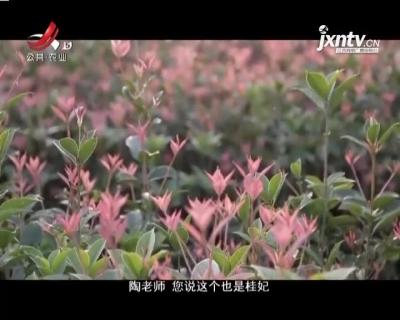 稻花香里20210426 乡村发现——植物界的变色龙
