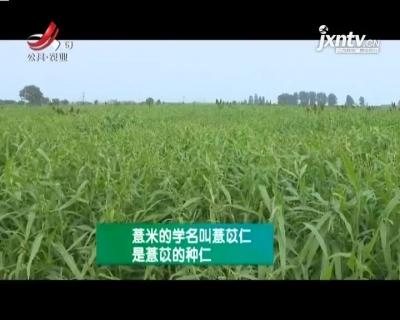 农博士大讲堂20210416 薏米栽培技术