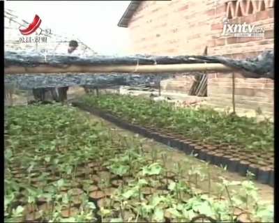 农博士大讲堂20210422 百香果培育技术