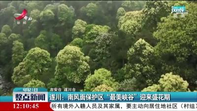 """遂川:南风面保护区""""最美峡谷""""迎来盛花期"""
