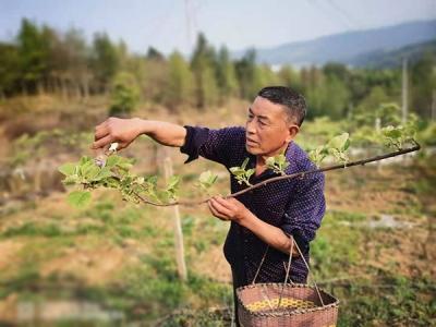 萍乡太源村:发展村级产业 壮大村集体经济