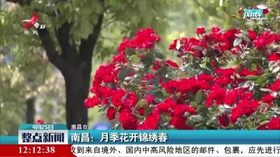 南昌:月季花开锦绣春
