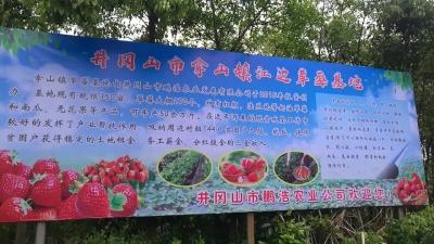 井冈山拿山镇:草莓种植让百姓甜上心头