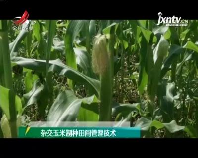 农博士大讲堂20210427 杂交玉米制种田间管理技术
