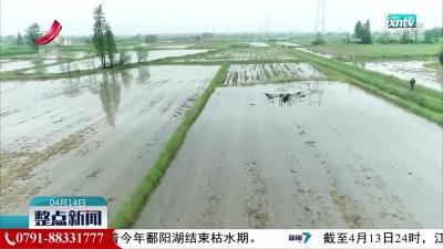 丰城:无人机播种 为农业发展助力