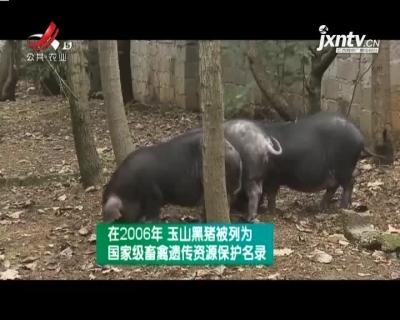 农博士大讲堂20210414 玉山黑猪