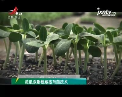 农博士大讲堂20210429 黄瓜双断根嫁接育苗技术