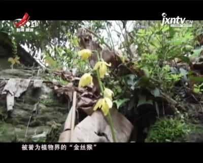 """江西九岭山自然保护区惊现植物界""""金丝猴"""""""