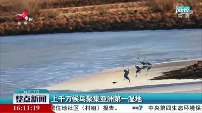 上千万候鸟聚集亚洲第一湿地