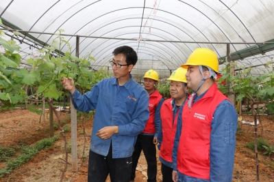 鹰潭月湖区供电公司:贴心服务 电力护航农业种植
