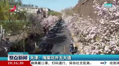 天津:海棠花开五大道
